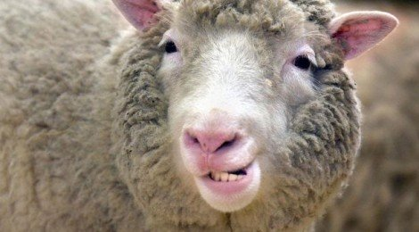 20 años de la clonación de la oveja Dolly